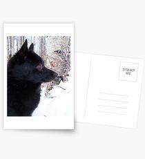 Schippy in the Snow Postcards