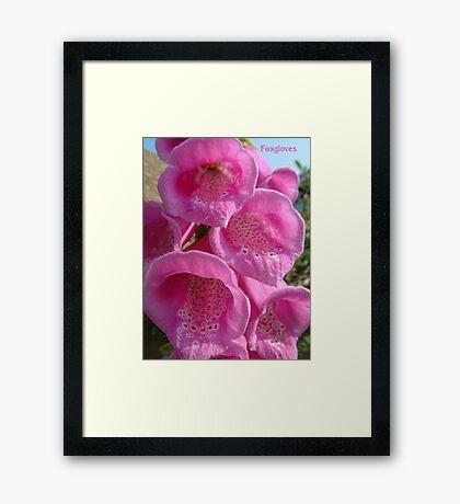 A Foxglove Framed Print