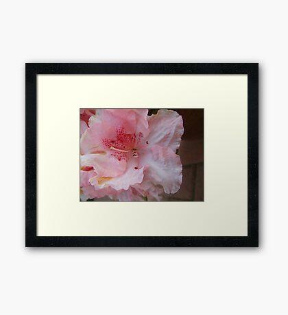 Unknown flower head Framed Print