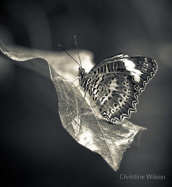 Silver Surfer by Christine Wilson