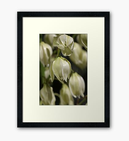Yucca Flowers Framed Print
