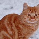 Snow Cat by ApeArt
