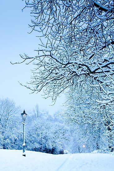 Narnia?! by Rachel Lilly