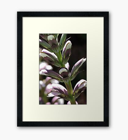 flower-oyster-plant-bloom Framed Print