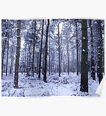 Snowy Woodlands Poster