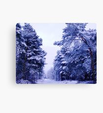 Winter Wonderland Walk - No. 1 - Allerthorpe Woods Canvas Print