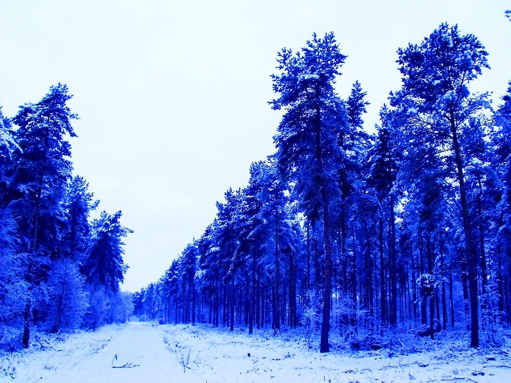 Snowy Woodland Walk in Blue by charlylou