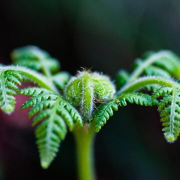 The Tarkine Fern  by taspaul