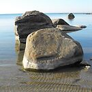 The Rocky Shores Of Lake Huron by Tracy Wazny