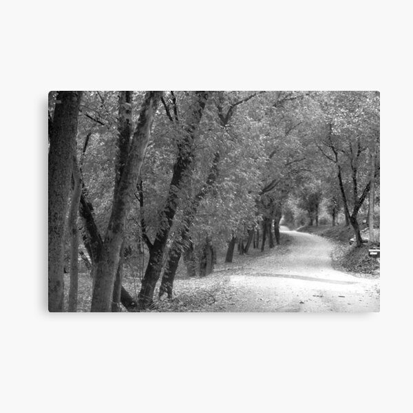 River Road Canvas Print