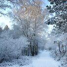Snowy Path by Ann Garrett