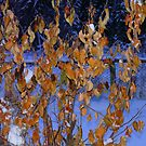 Golden Leaves on An Apple Tree in Jan, by MaeBelle