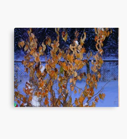 Golden Leaves on An Apple Tree in Jan, Canvas Print
