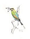 Rainbow Bee-Eater by Meaghan Roberts