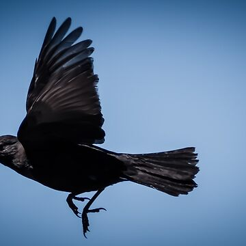 The Black Bird  by taspaul