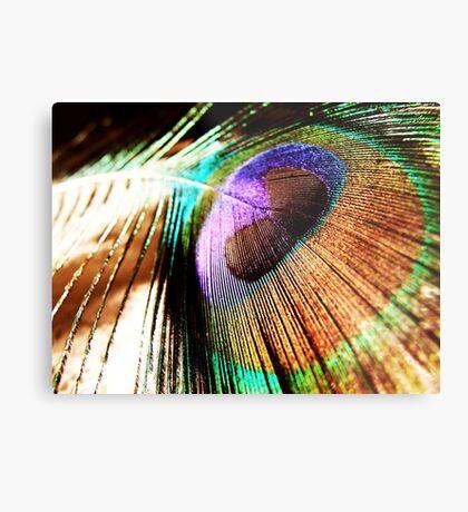 beautiful feather Metal Print