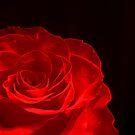 Red Rose. by Vitta