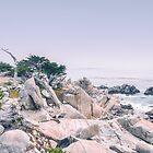 Pacific Coast California II by Pascal Deckarm