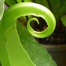 Nature's Tick by rufflesal