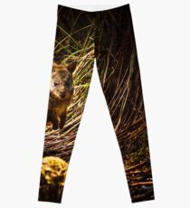 Small marsupial Pademelon in thick Tasmania forest Leggings