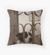 A Little Dog's Gaze Throw Pillow