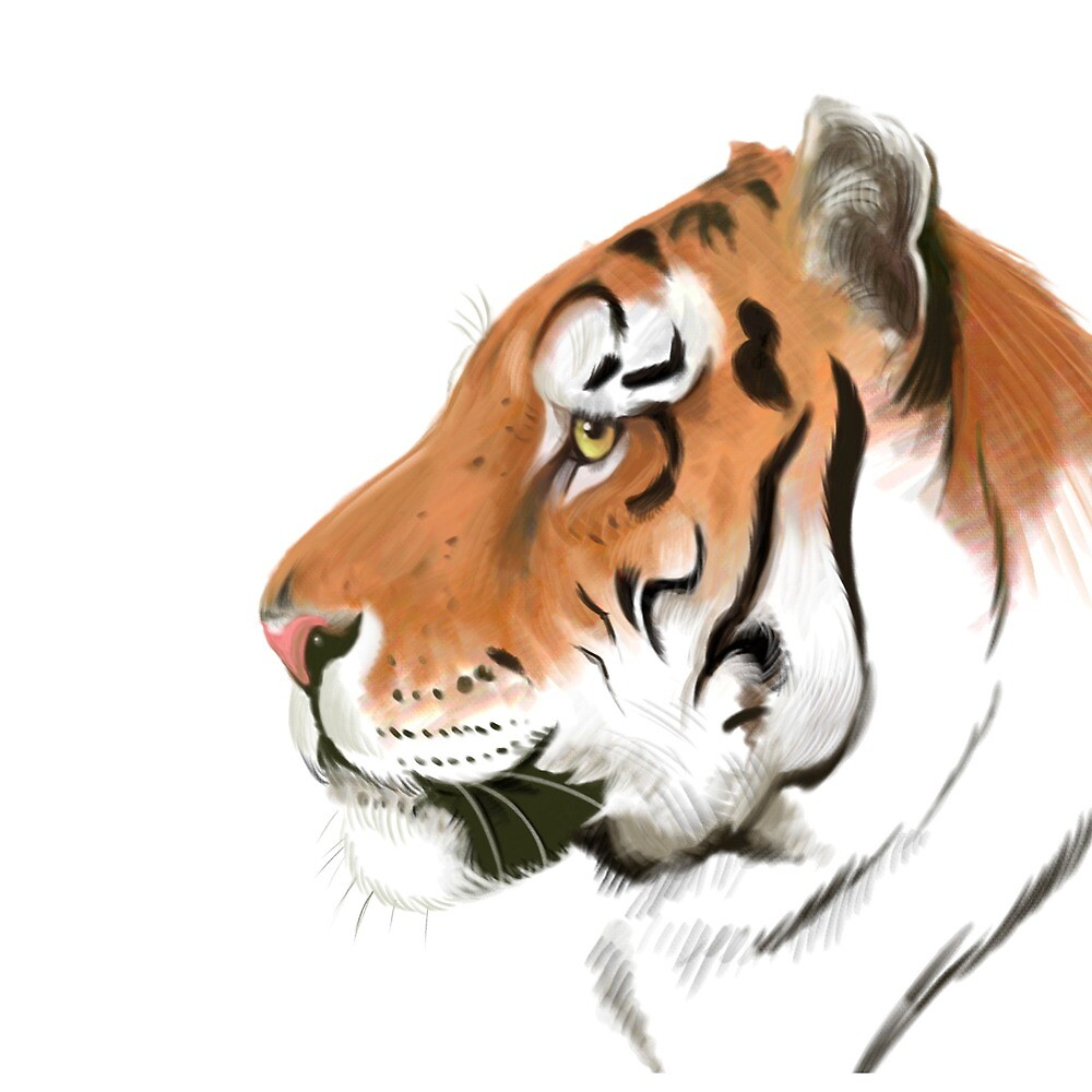 Portrait of a Tiger on white background by artbywilf