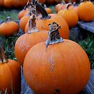 Pumpkins in a Row by Diana Forgione