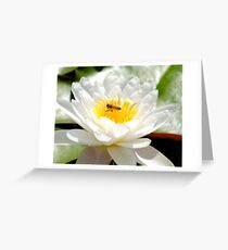 Bee on Lily Greeting Card