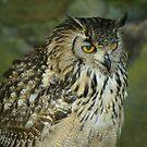 Bengal Eagle Owl by BronReid