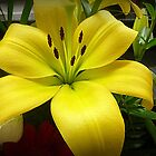 *Gorgeous Lily in closeup at Market* by EdsMum