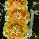 Prickly Pear Flowers by © Loree McComb