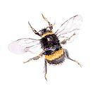 Bumble bee watercolour ©BonniePortraits by BonniePortraits