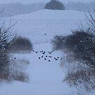 Feed the birds by Sharon Perrett