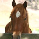 Welsh Mountain Pony by Susie Walker