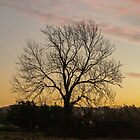 Silhouette Of A Tree by widdy170