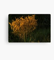 Sunset Brush Canvas Print