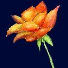 Orange Rose on Dark Blue Background by CarolineLembke