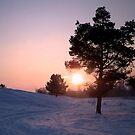 Winter Sunset by ienemien