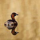 Little Grebe by Neil Bygrave (NATURELENS)