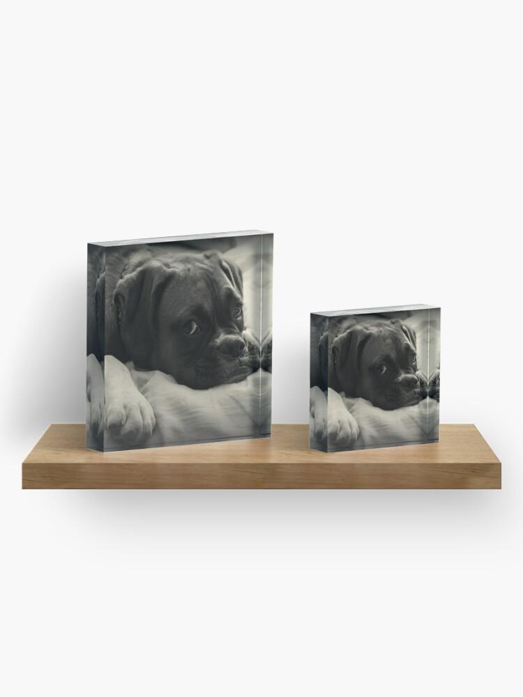 Alternative Ansicht von Zeit zum Ausruhen - Boxer Dog Series Acrylblock
