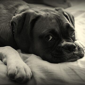 Time to Rest - Boxer Dog Series by Evita