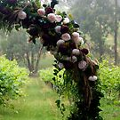 To have and to Hold - Magpie Springs - Adelaide Hills Wine Region - Fleurieu Peninsula - South Australia by MagpieSprings