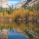 Mirror Lake - Yosemite Valley - Portrait Image by TonyCrehan