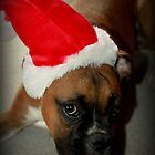 Dino ~Santa's Little Helper ~ Boxer Dog Series by Evita