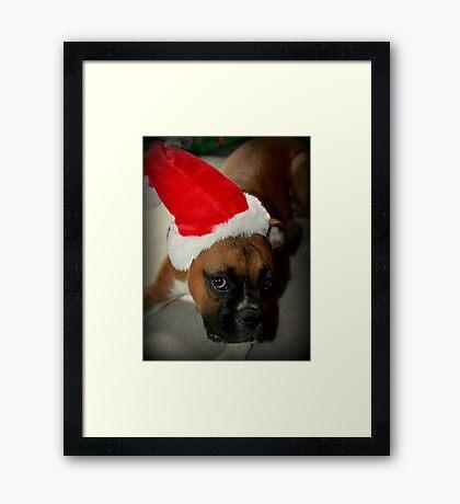Dino ~ Santas kleiner Helfer ~ Boxer Dog Series Gerahmter Kunstdruck