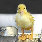 I'm Just Ducky! by Lori Deiter