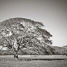 Rafiki's Tree by Appel