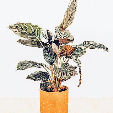 Botany II by 83oranges