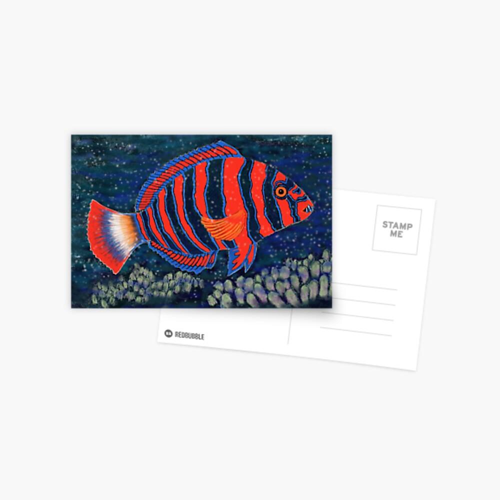 Postcards for the Reef 11: Harlequin Tuskfish Postcard