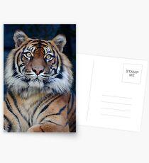 Tiger, Taronga Zoo Postcards